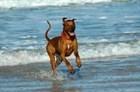 Кормление активных пород собак.