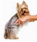 Кондиционеры и бальзамы для собак.