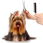 Особенности груминга длинношерстных пород собак.