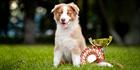 Самые зрелищные соревнования на World Dog Show–2016!