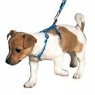 Виды шлеек для собак и их применение.