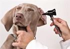 Средства по уходу за ушами собак.