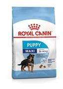 Royal Canin - Сухой корм для юниоров крупных пород MAXI JUNIOR